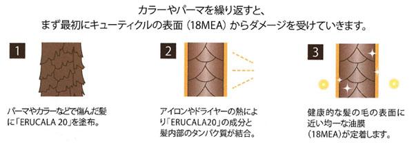 カラーやパーマをくりかえすとまず最初にキューティクルの表面(18MEA)からダメージを受けていいきます。